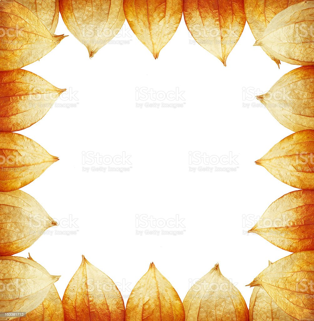 frame of Physalis royalty-free stock photo