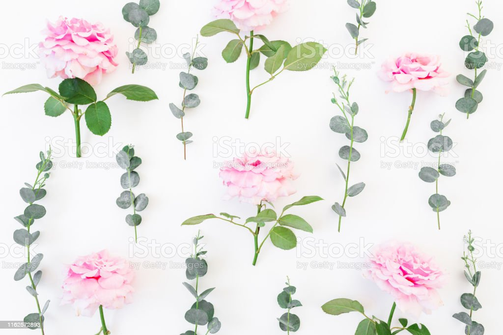 Frame of pink roses flowers and eucalyptus on white background. Flat...