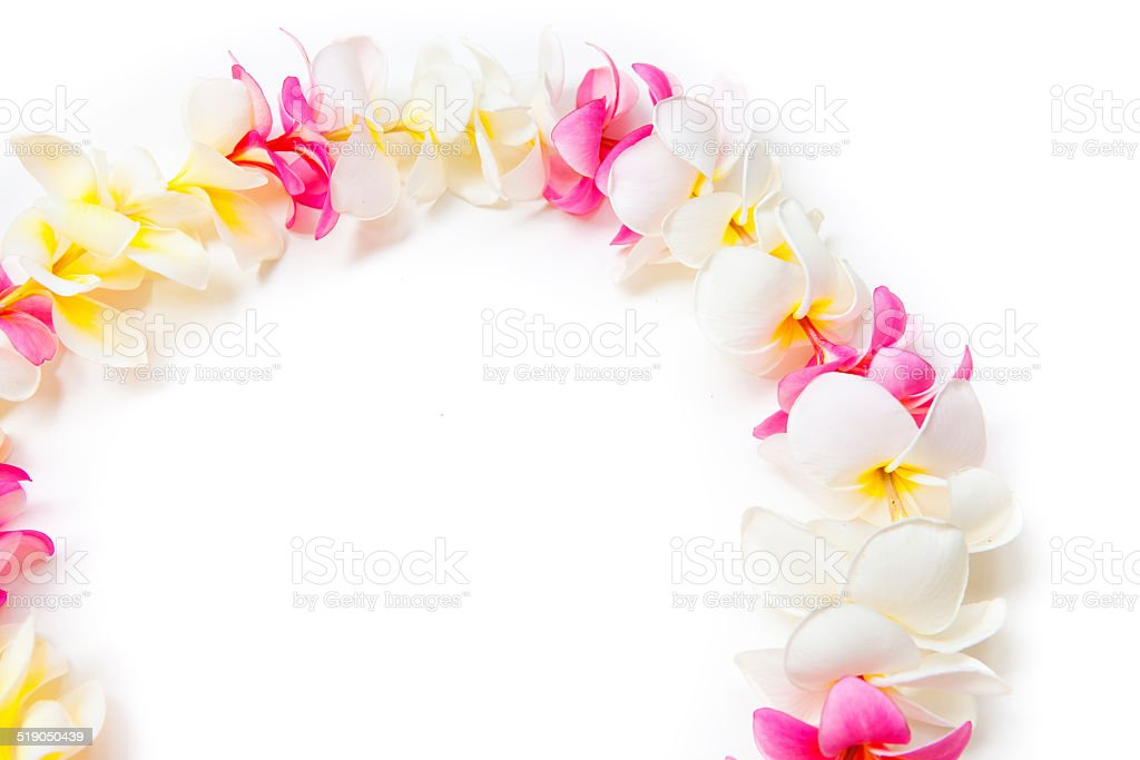 Frame of Plumeria Flower Hawaiian Lei Necklace Section, on White stock photo