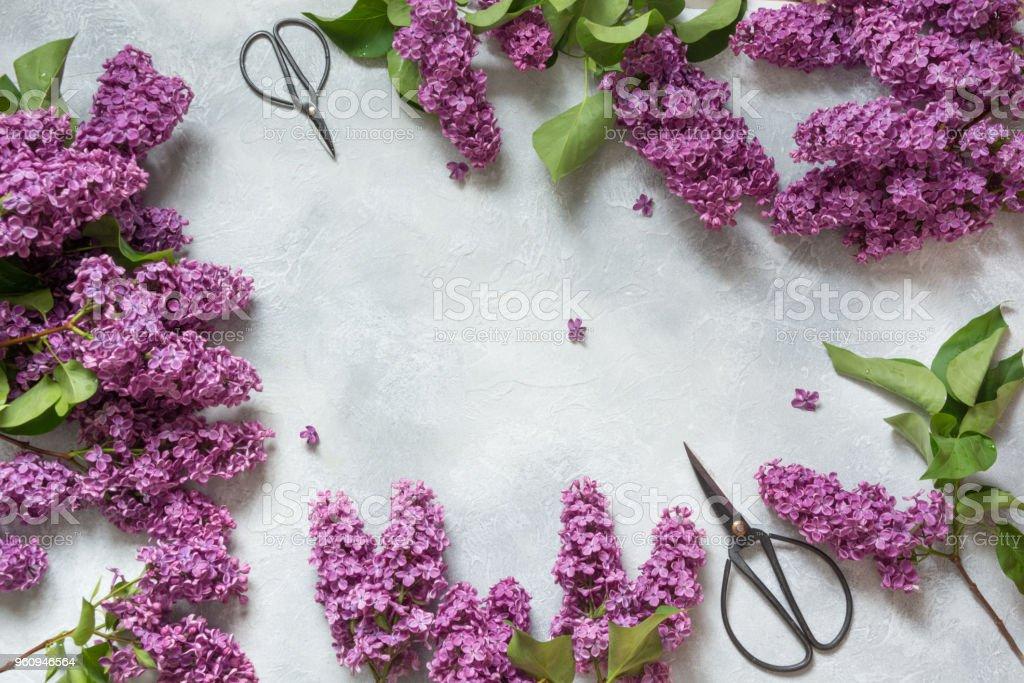 Rahmen einer lila lila Blumen und Bonsai-Schere für Floristik mit Platz für Text. Ansicht von oben. - Lizenzfrei Baumblüte Stock-Foto