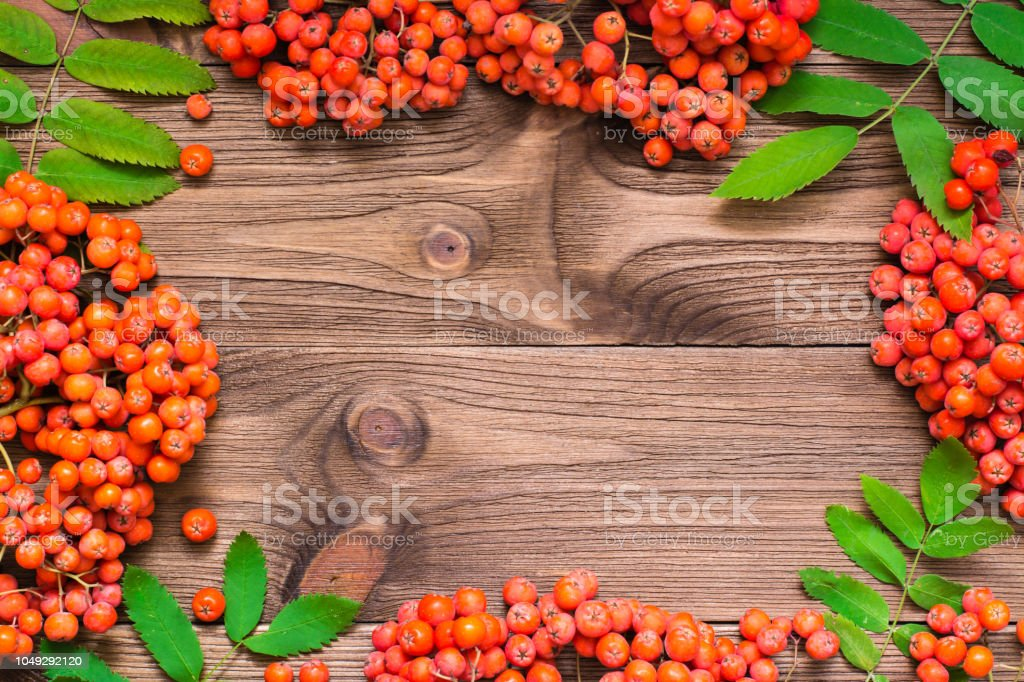 Frame of red berries and leaves of rowan on a wooden background. Top...
