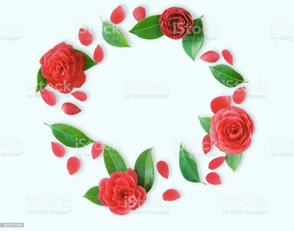 Frame of red Camellia flowers, leaves and red petals on light cyan background. Flat lay, top view. Frame of spring flowers. Isoleted.  Camellia brooch, sticker, patch stock photo