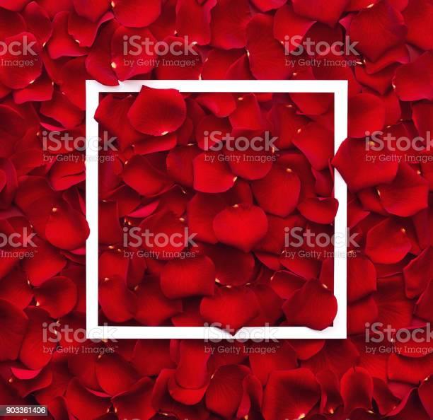 Frame of red rose petals picture id903361406?b=1&k=6&m=903361406&s=612x612&h=qgh8ucwhm4fud3kb qfgtdov9vq3ludmkgaxn2iib4i=