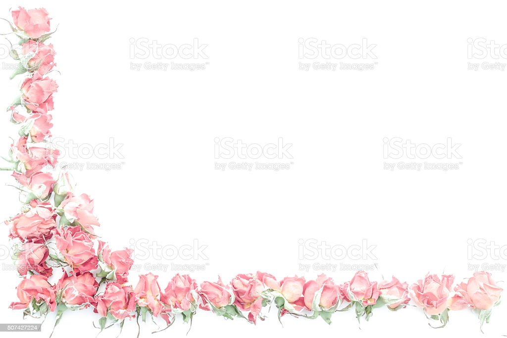 frame of rose stock photo
