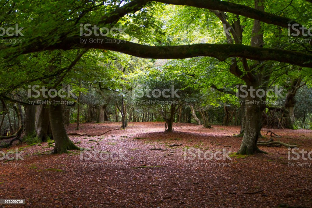 Frame of trees in an autumn forest stock photo