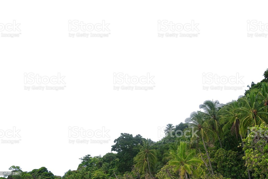 Frame of tropical trees stock photo