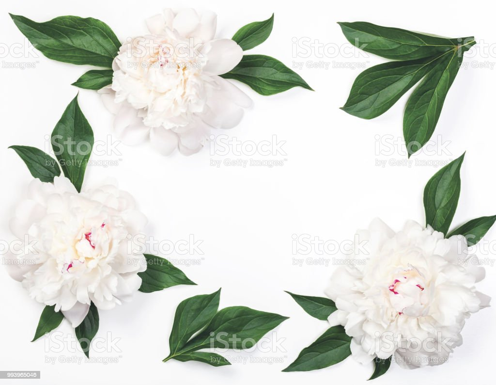 Frame Of White Peony Flowers And Leaves Isolated On White Background