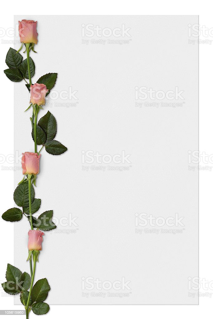 Frame paper with roses love letter romantic background royalty-free stock photo