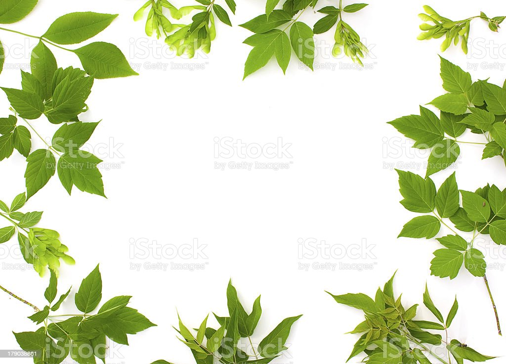 Frame photo of  leaves royalty-free stock photo