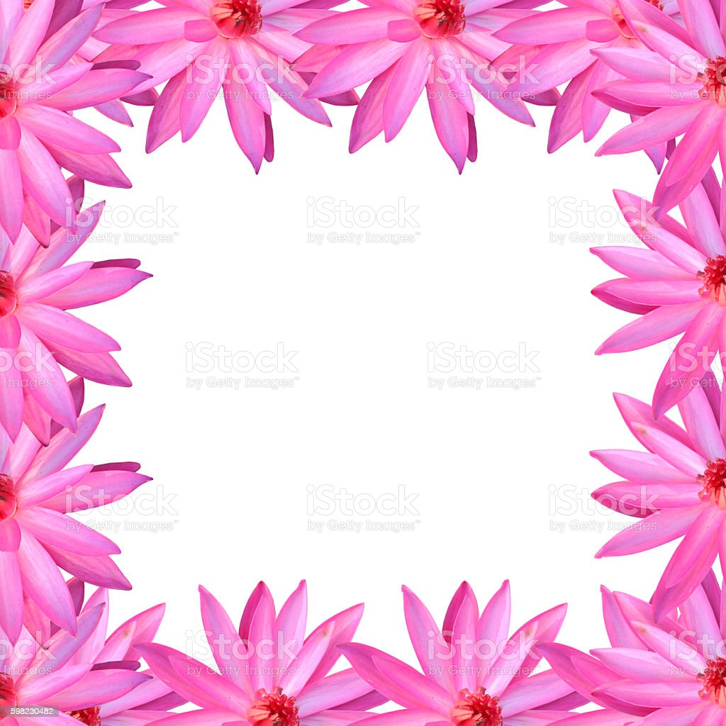 frame pink lotus isolated on white background. foto royalty-free