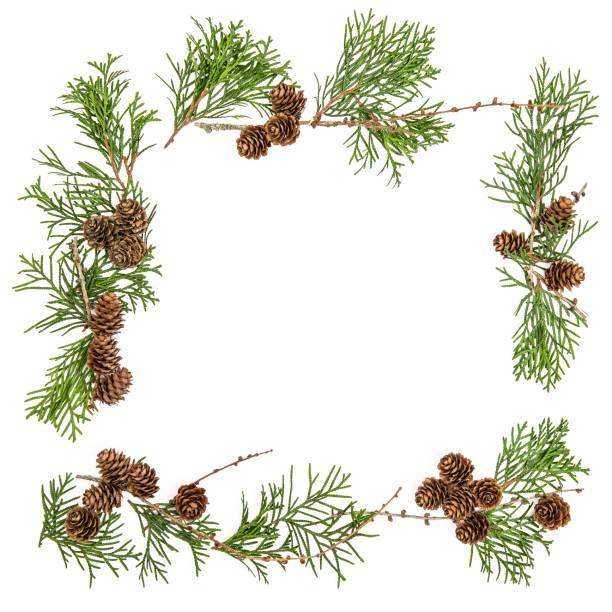 frame thuja baum branchescones weihnachten blumen flach legen - kiefernzapfen stock-fotos und bilder