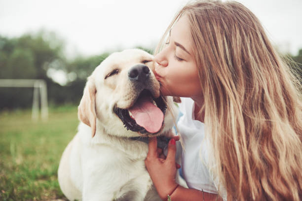 frame with a beautiful girl with a beautiful dog in a park on green grass. - embracing stock pictures, royalty-free photos & images
