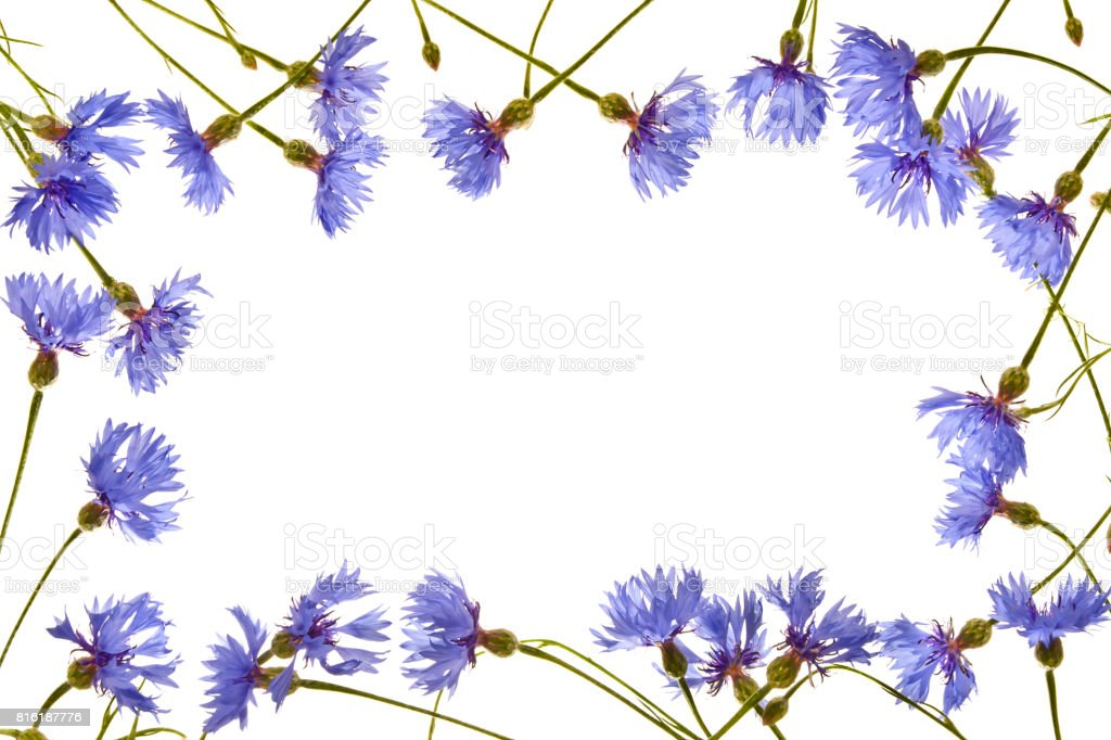 Frame with blue cornflowers close up. stock photo