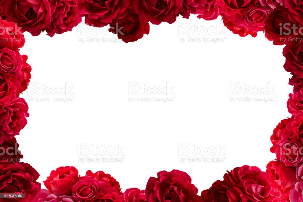 Frame With Bush Of Red Rose Flowers Background Stock Photo & More ...