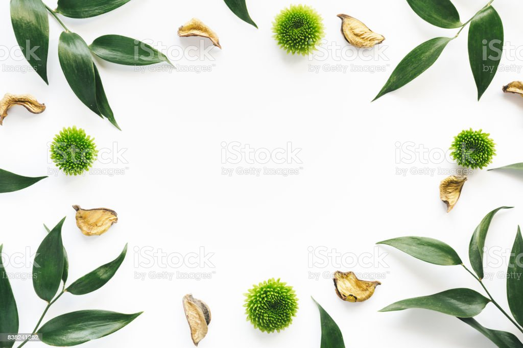 Frame With Green Leaves On White Background stock photo