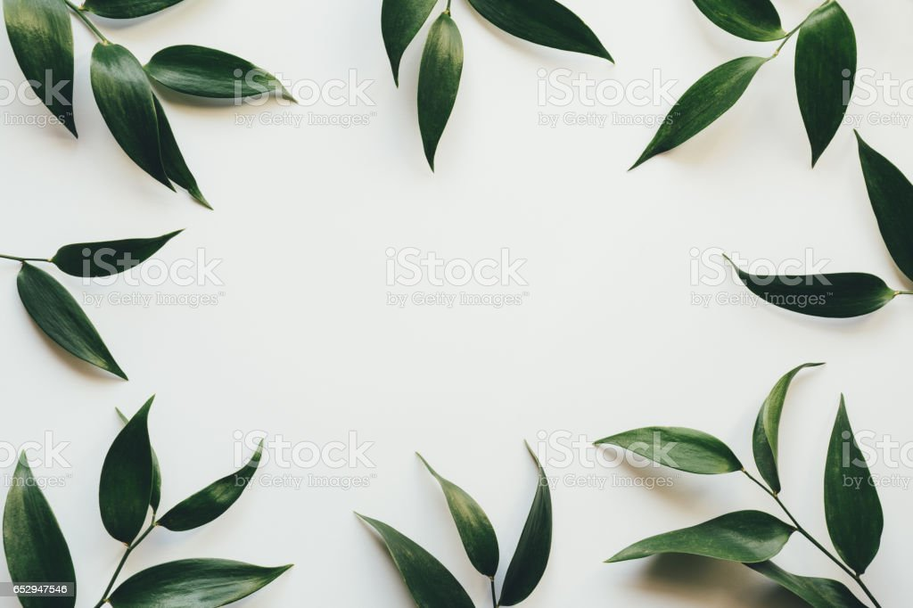 Frame With Green Leaves stock photo