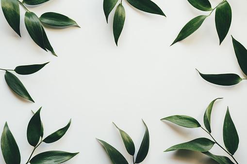 綠色的葉子的框架 照片檔及更多 一組物體 照片