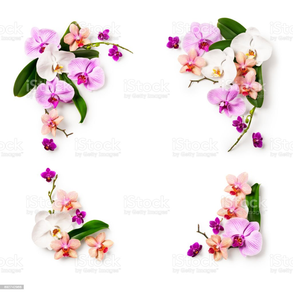 Frame with orchid flowers stock photo