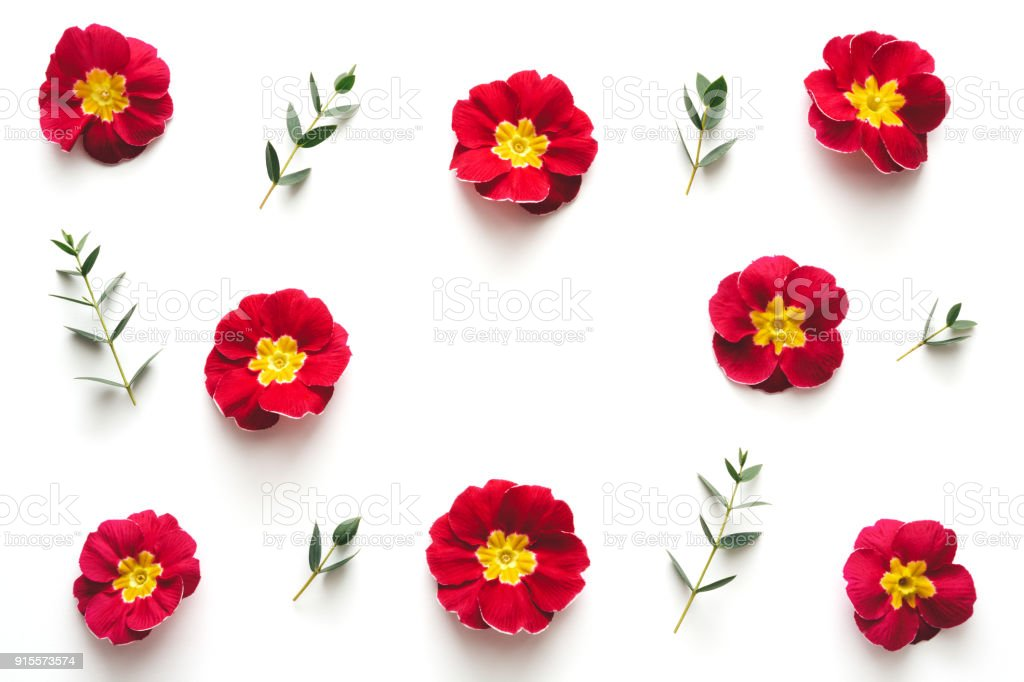 Frame with red flowers on white background stock photo more frame with red flowers on white background royalty free stock photo mightylinksfo