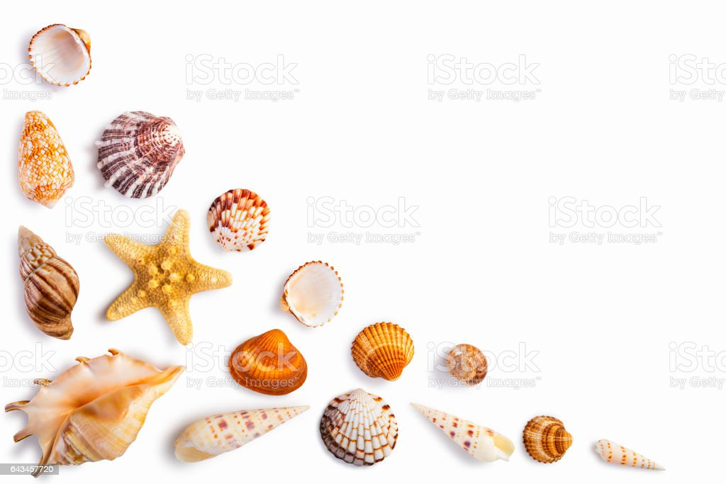 Frame with seashells isolated on white stock photo