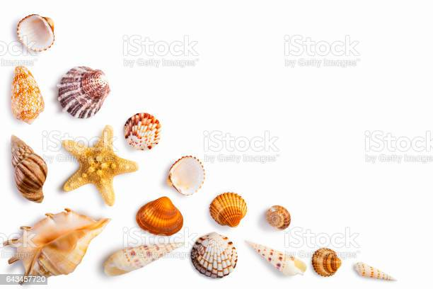Frame with seashells isolated on white