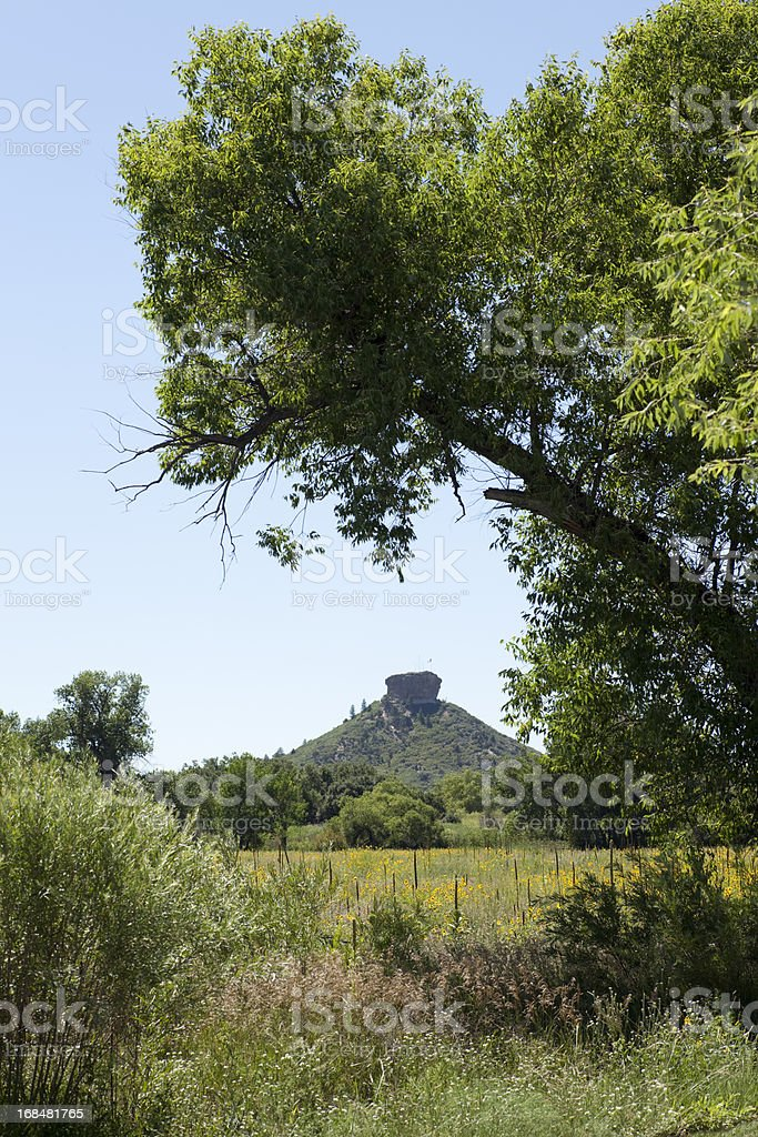 Framed Sunflower field and Castle Rock Colorado Vertical stock photo