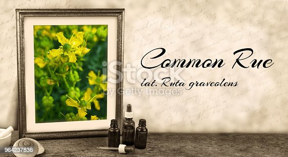 framed picture with medicinal plant or herbs and latin label - Common Rue, ruta graveolens