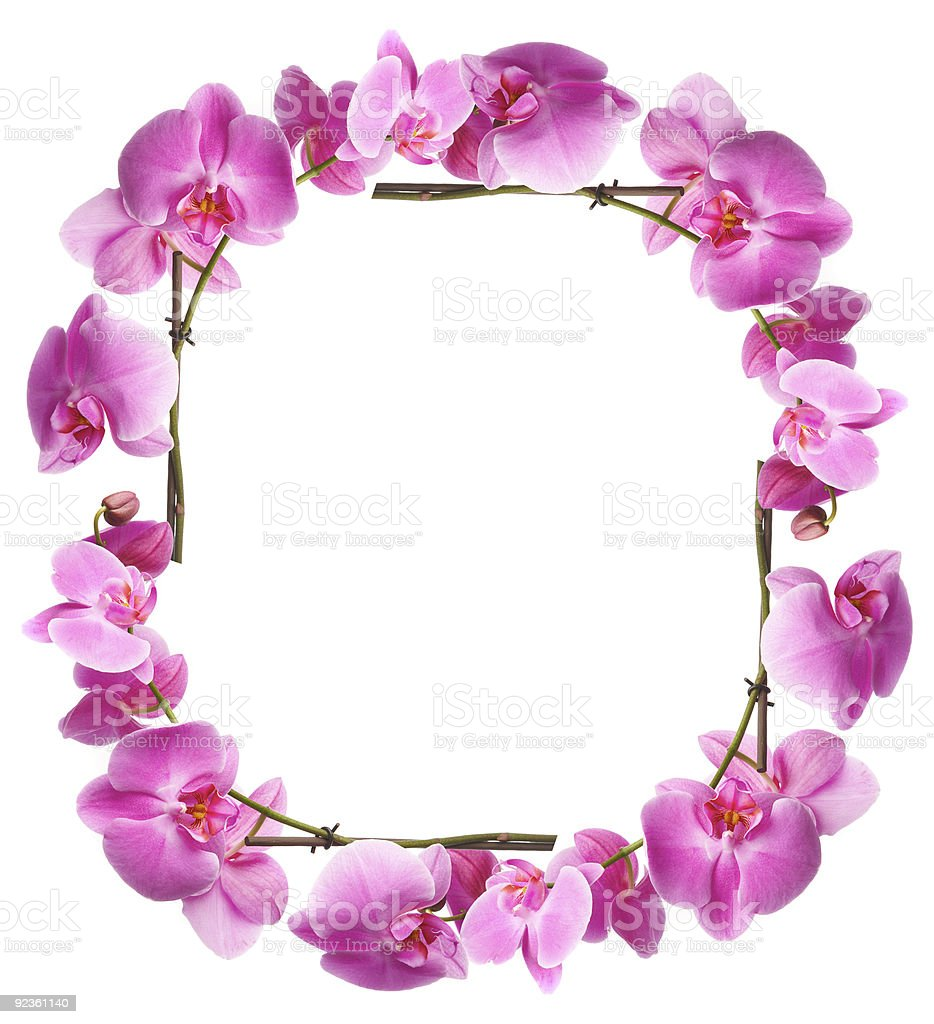 Framework from flowers orchids royalty-free stock photo