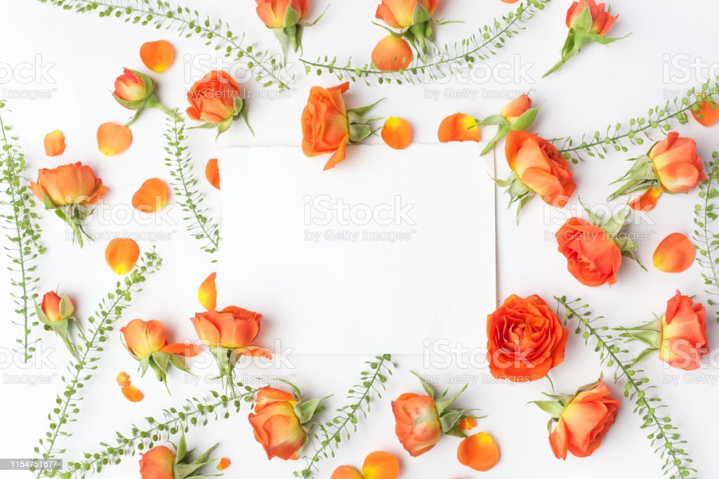 Framework from orange roses on white background. Flat lay.