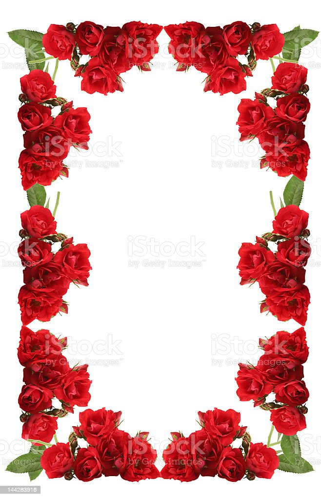 Framework from roses on a white background. stock photo