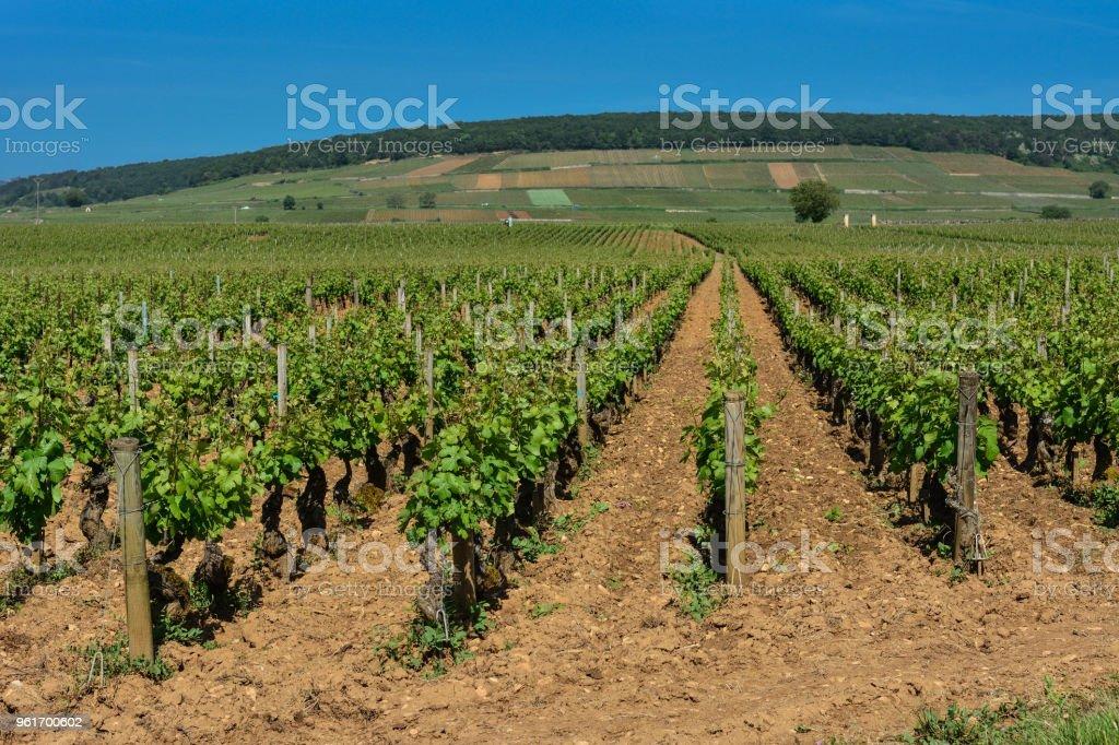 France Bourgogne aloxe-corton - Photo