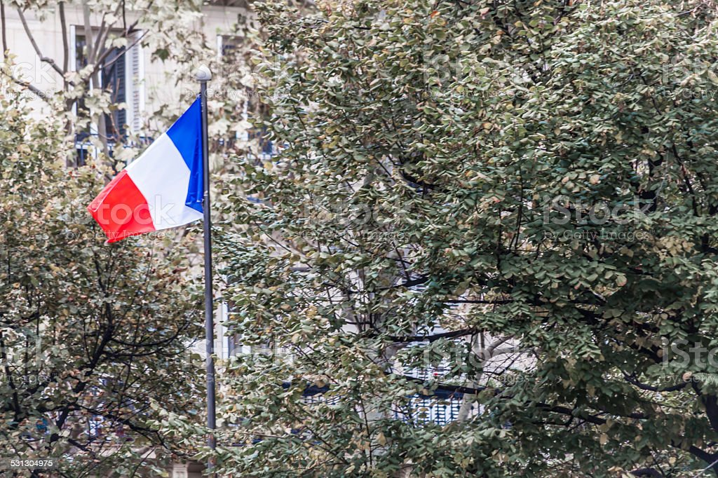 France flag in the park stock photo