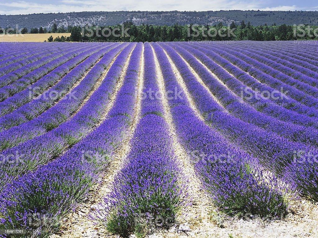 france royalty-free stock photo