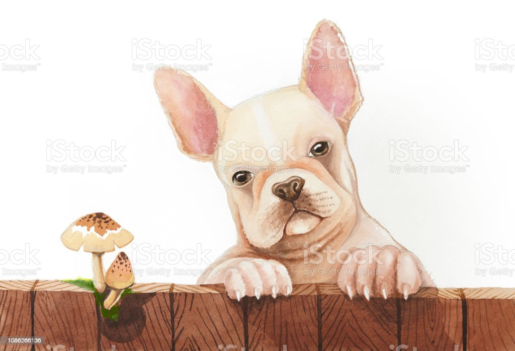 Royalty Free Cute Puppy Dog Eyes Drawing Pictures Images And Stock