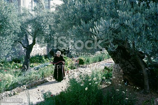 Franciscan monastery, Jerusalem, Israel, 1983. Monk irrigates a monastery garden in Jerusalem.