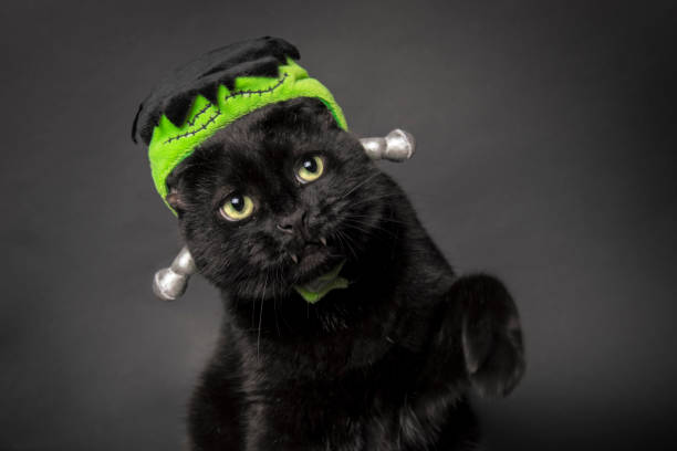 Franken-Kitty An adorable black cat posing with a monster hat on. black cat stock pictures, royalty-free photos & images