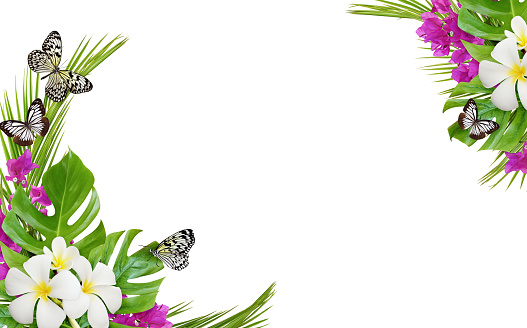 Franfipani flowers and bougainvillea with palm leaves and butterflies in a corner tropical background