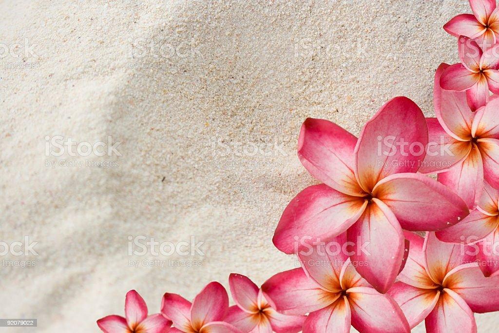 Frangipani (Plumeria) Flower Border on Sand royalty-free stock photo