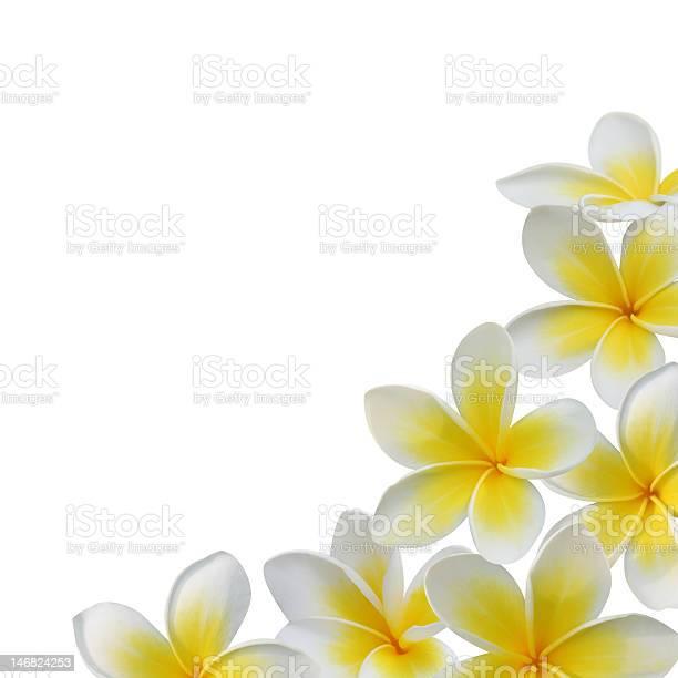 Frangipani flower frame picture id146824253?b=1&k=6&m=146824253&s=612x612&h=k4r777bpviivkpqf1vrmy6tyxodo zajz8p6 wt6d e=