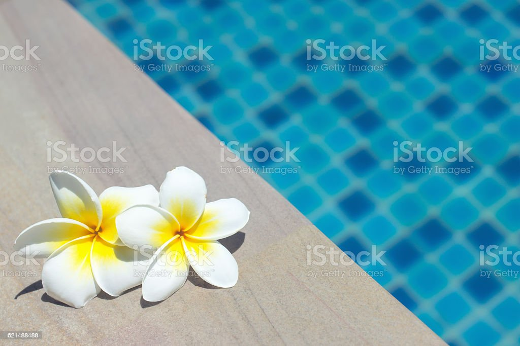 frangipani on pool foto stock royalty-free