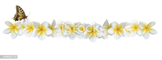 Frangipani flowers - vast collection of frangipani flowers in my portfolio
