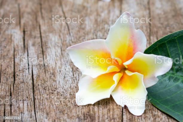 Frangipani tropical flower old wooden background picture id1060077232?b=1&k=6&m=1060077232&s=612x612&h=rikjn9blsczl3adyph ioc0ihgpwdwg24xpbdpoaroc=