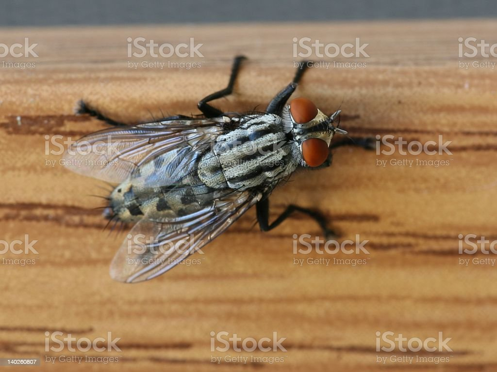 Frankenstein Fly on the Wall royalty-free stock photo