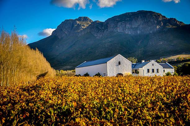 Franschhoek wine farm stock photo