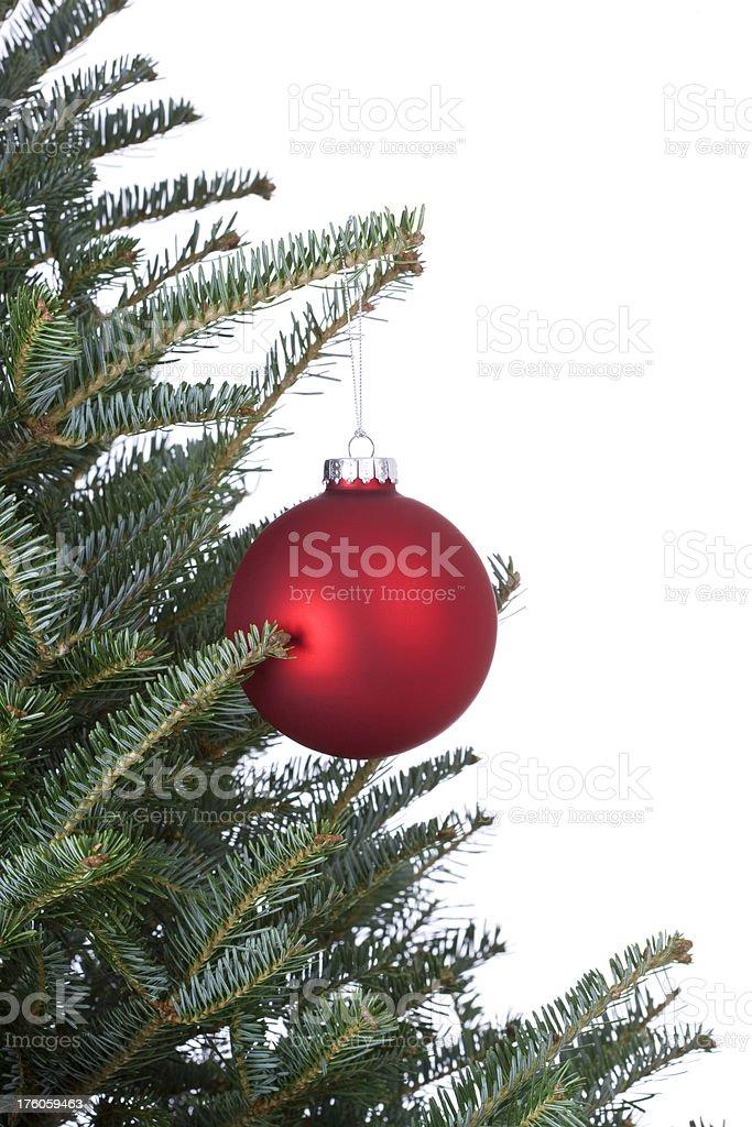 Fraser Fir Christmas Tree royalty-free stock photo