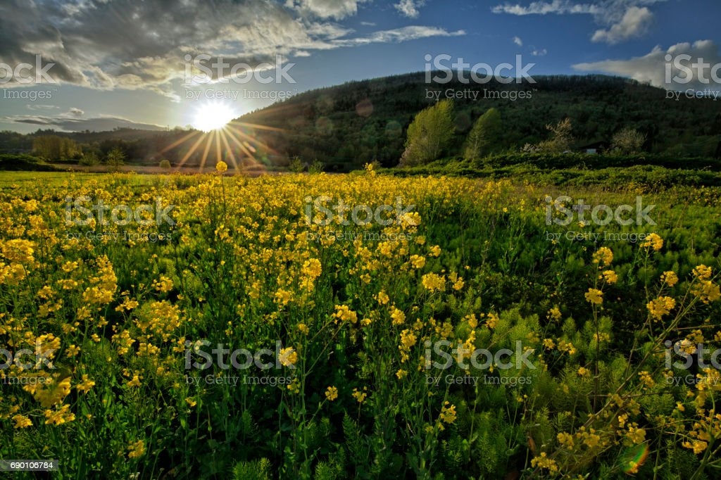 Fraser Valley at sunset in springtime, Abbotsford, BC, Canada stock photo