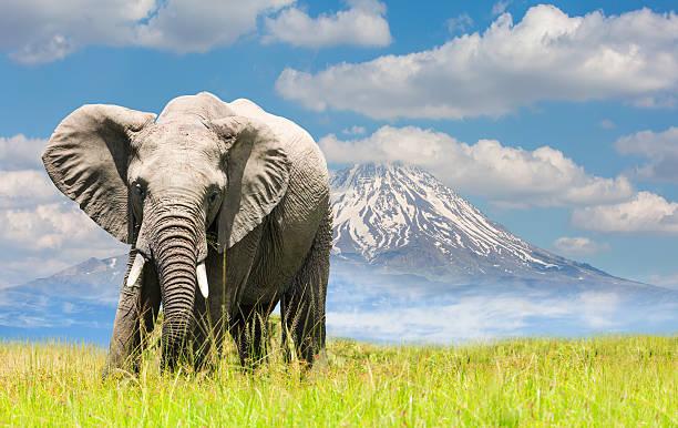 De elefante africano y a las montañas - foto de stock