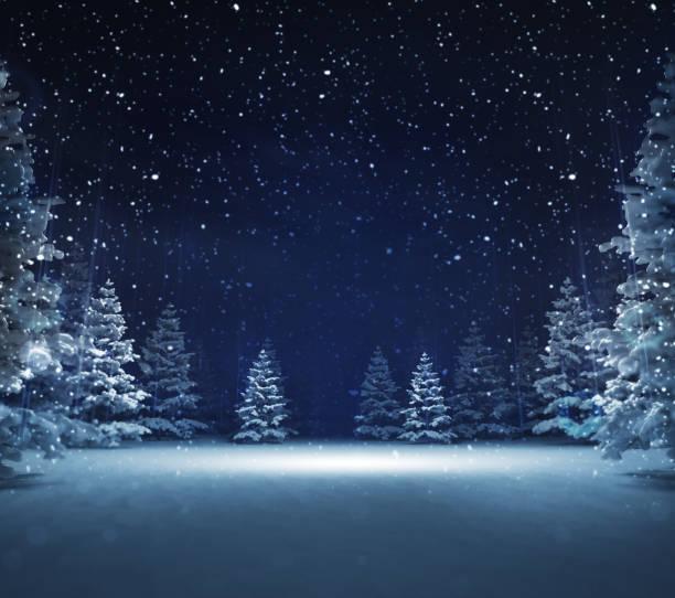 自由區域在冬天雪樹林 - 夜晚 個照片及圖片檔