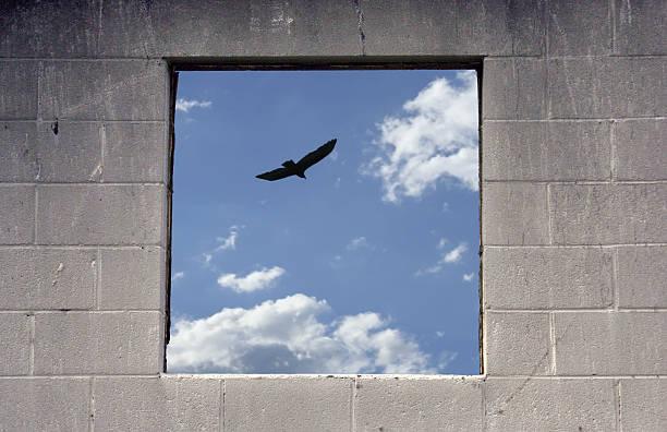 free as a bird - claustrofobie stockfoto's en -beelden