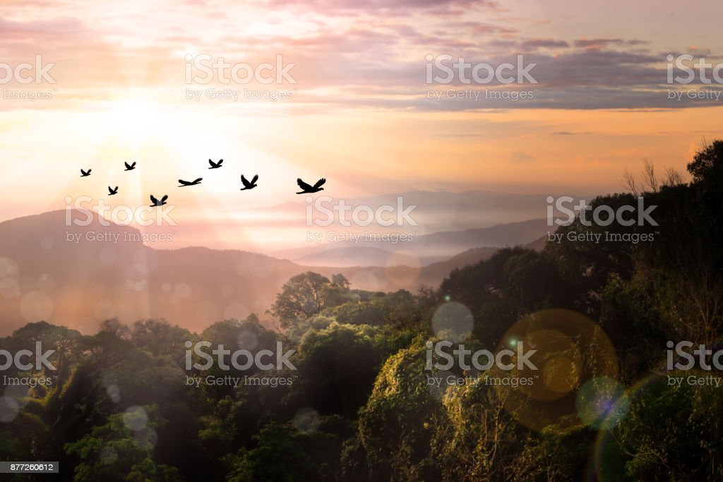 Free birds flying together in the sunrise sky. Freedom concept...